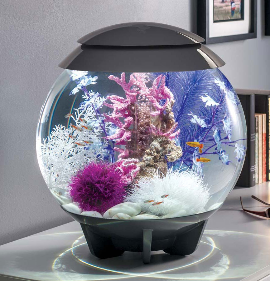 60l biorb halo grey aquatics to your door for Decoration aquarium 60 litres