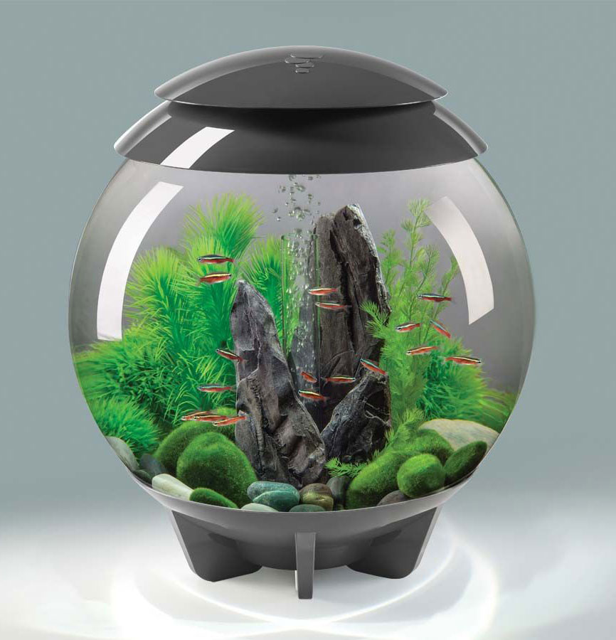 30l biorb halo grey aquatics to your door - Aquarium in der wand ...