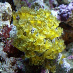 Corals and Algaes