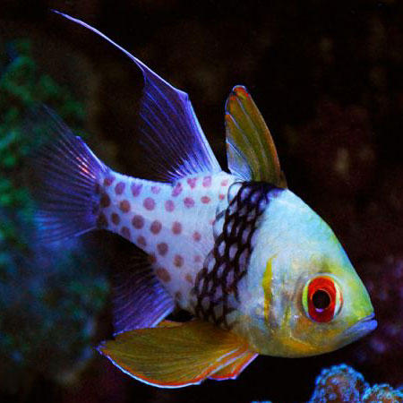 Best Flake Food For Reef Fish