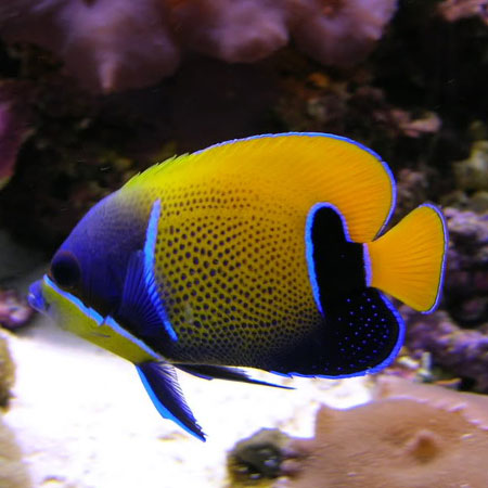 Fish Tanks for Sale: Add alluring decor to your home with fish aquariums from Petco. Buy freshwater, saltwater, cheap, corner, cool fish tanks and get 20% off.
