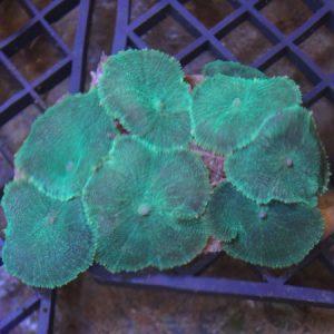 Fluorescent Green Mushroom Rock