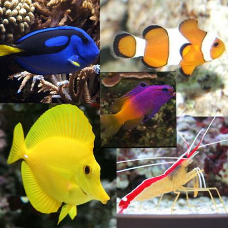 Nemo Pack Pack A Aquatics To Your Door