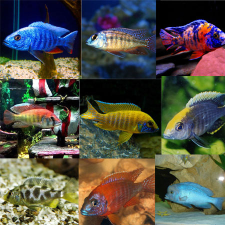 10x Assorted 4/6cm Malawi PACK 1