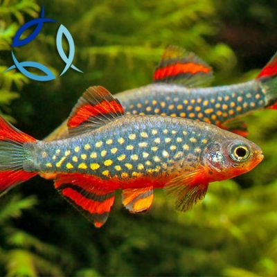 Buy Tropical Fish Marine Fish And Koi Carp Online Aquatics To Your Door
