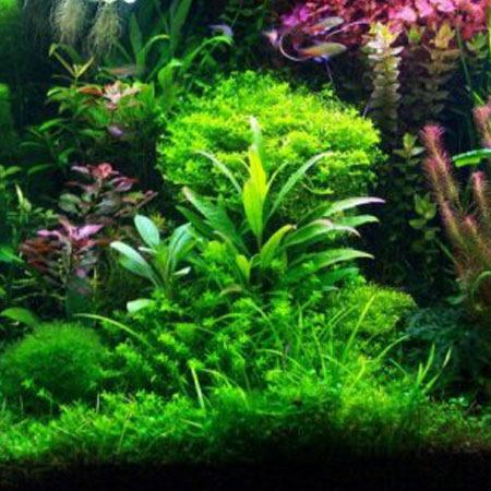 Tropical Plants (5)