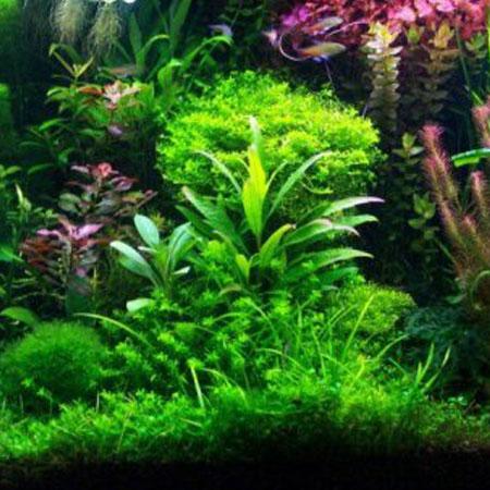 Tropical Plants (15)