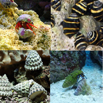 Marine Tank Cleaners