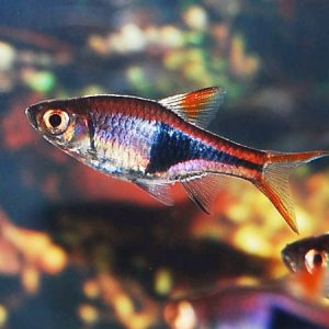 Tropical Offers Of the Week